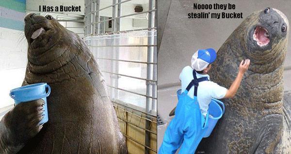 Gossip Bucket - I has a bucket walrus